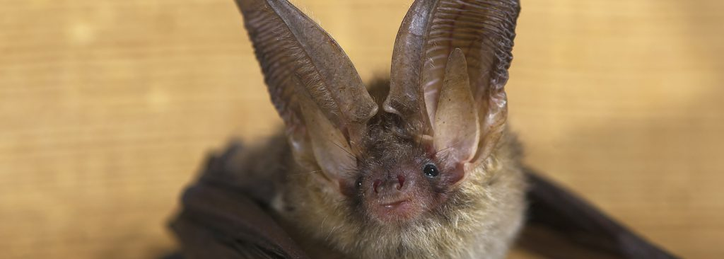 resized bat image